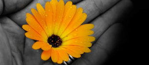 flowers-72177_1024x512